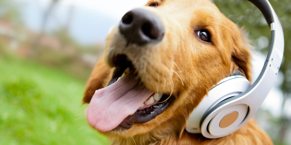 walking-the-dog-fun-music