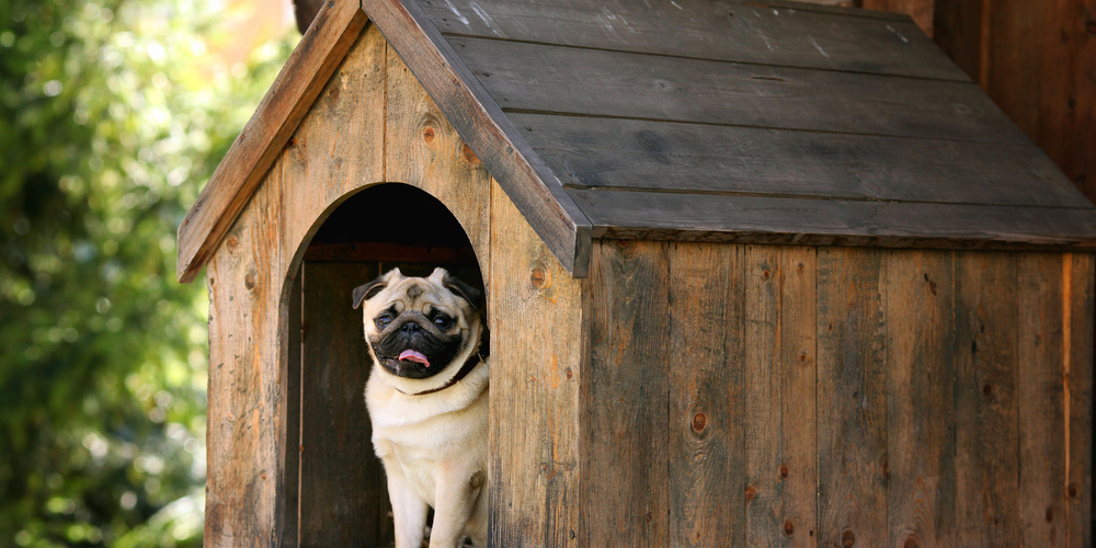 Pug dog sitting inside kennel